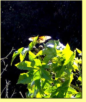 26mar06butterfly